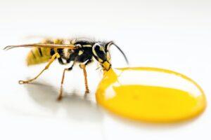 Bee Innosol fragrance transparency